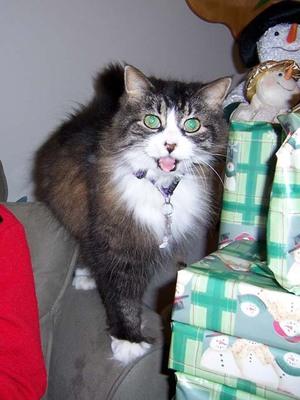 Kitten_christmas_day_2006